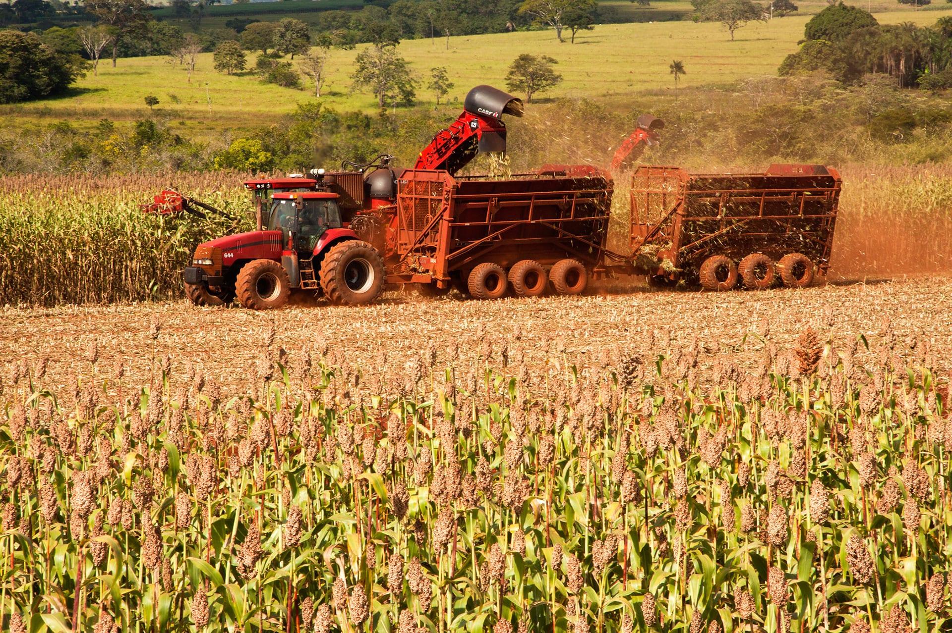 Hengel Transportes - Sorgo alta biomassa é usado na reforma dos canaviais